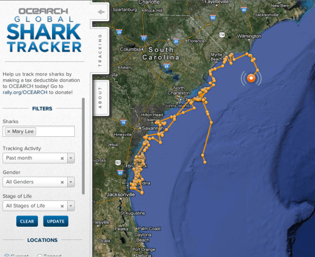 Ocearch-Global-Shark-Tracker-Mary-Lee