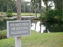 the_plantation_golf_course_edisto_beach_please_dont_feed_the_alligators